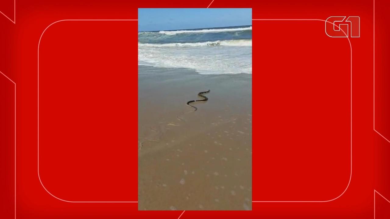 Cobra é encontrada no mar de praia em Santa Catarina