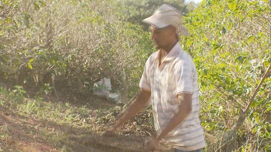 Agropecuária acumula 94% de vagas e impulsiona empregos no Sul de MG