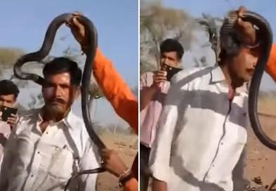 Turista é picado por cobra durante número de encantador de serpentes
