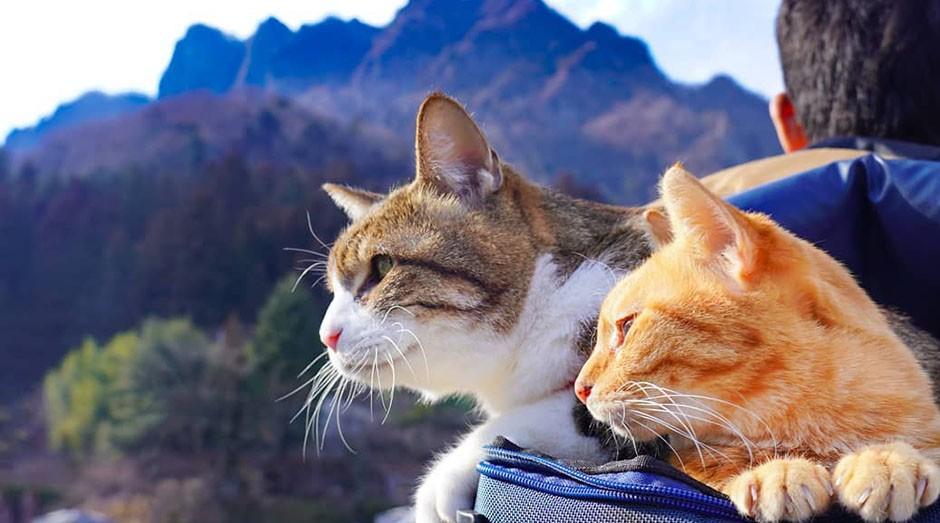 Os gatos Daikichi e Fuku-Chan na mochila de seu dono Daisuke Nagasawa. (Foto: Instagram/the.traveling.cats)