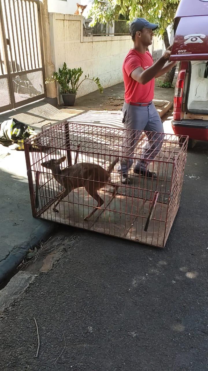 Filhote de veado é capturado de dentro de quarto em Palmeira D'Oeste