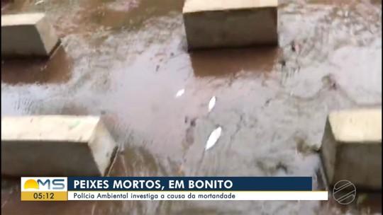 Peixes são encontrados mortos em córrego de Bonito