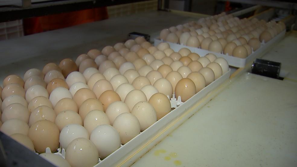 Estes ovos contêm proteínas produzidas a um décimo do custo das fabricadas por empresas farmacêuticas — Foto: Reprodução/TV TEM