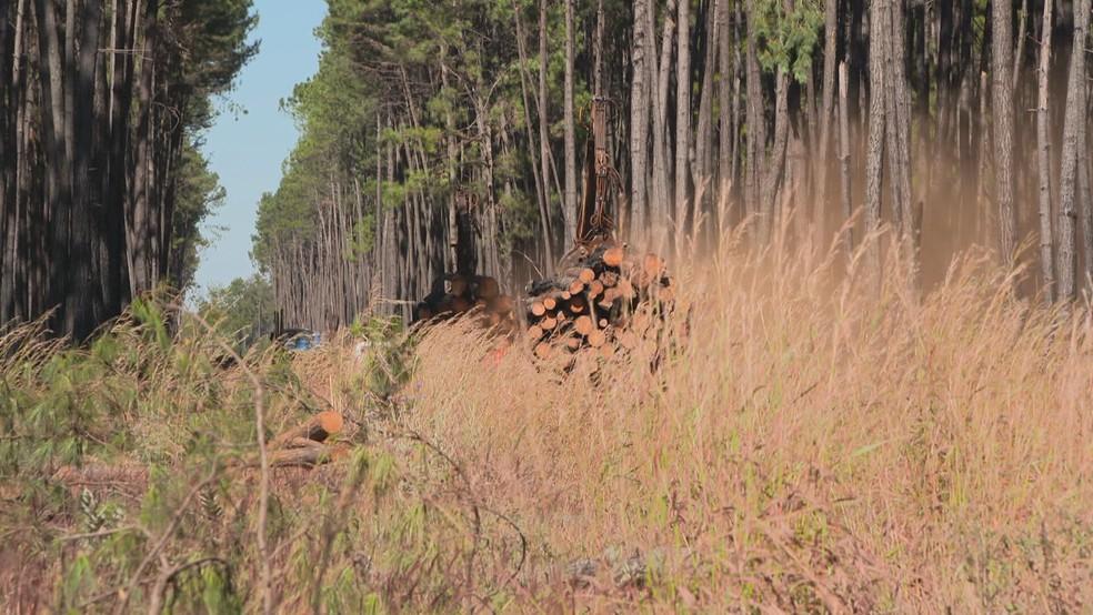 Empresa é suspeita de retirar madeira de forma ilegal da Floresta Nacional de Brasília — Foto: TV Globo/Reprodução