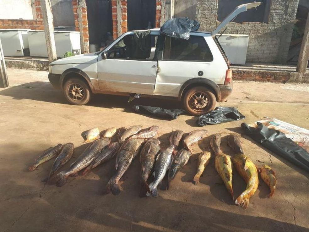 Peixes e veículo foram apreendidos pelos fiscais da Sema (Foto: Sema-MT/Divulgação)
