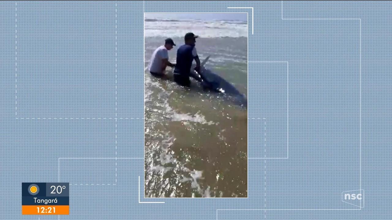 Mutirão tenta salvar baleia que encalhou em praia de Imbituba, no Sul do estado