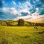 Proteção de Tela: Meadow