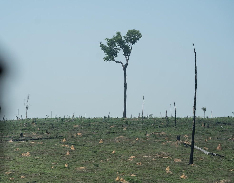 Pasto após queimada em Rondônia — Foto: Fábio Tito/G1