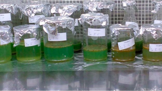 Análises realizadas em amostras de fezes humanas apontaram a presença de microplásticos de até nove tipos diferentes (Foto: Medical University of Vienna/Divulgação via BBC News Brasil)