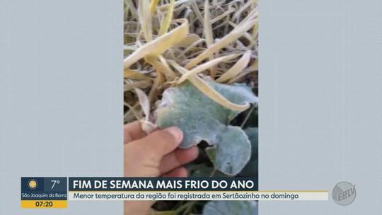 Termômetros marcam 1,6ºC na região de Ribeirão Preto e geada rompe até cabos de eletricidade
