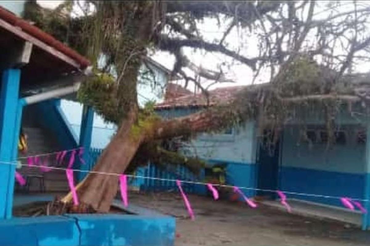 Ventania derruba árvore em pátio de escola pública em Angra dos Reis - G1