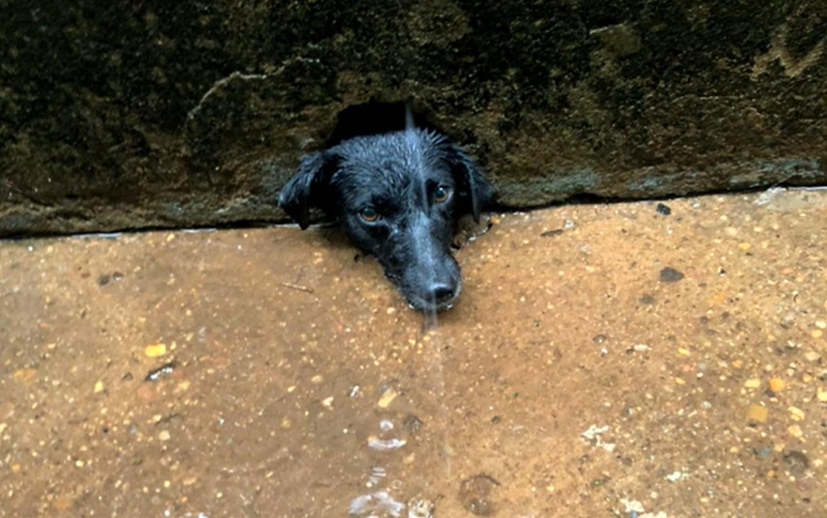 Bombeiros salvam cadela que ficou com cabeça presa em buraco no muro de casa, em Caldas Novas