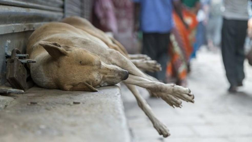 Uma combinação entre fatores genéticos e experiências de vida explica comportamento de cães em relação aos humanos, afirmam pesquisadores — Foto: Getty Images/BBC