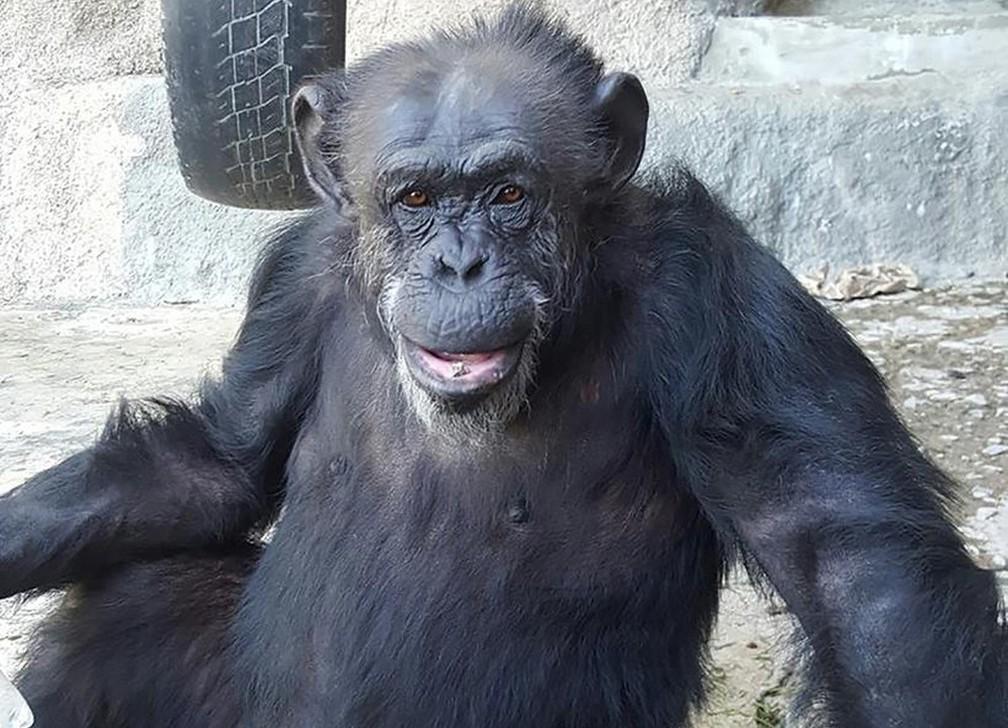 Cecília estava em zoológico da Argentina (Foto: Divulgação/GAP Brasil)