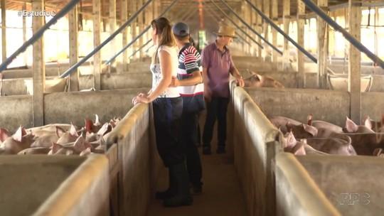 Família da região Oeste do Paraná transforma esterco de porco em energia