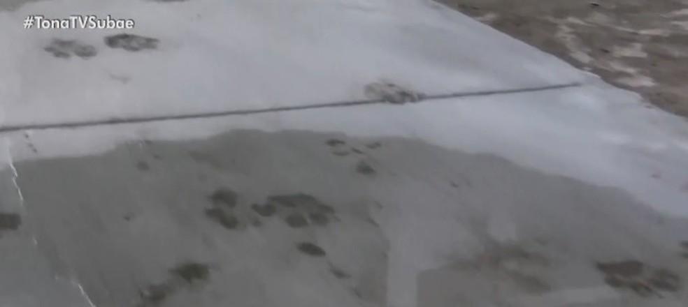 Durante as obras, Boby também não saiu do local, deixando marcas das patas na calçada — Foto: Reprodução/ TV Subaé