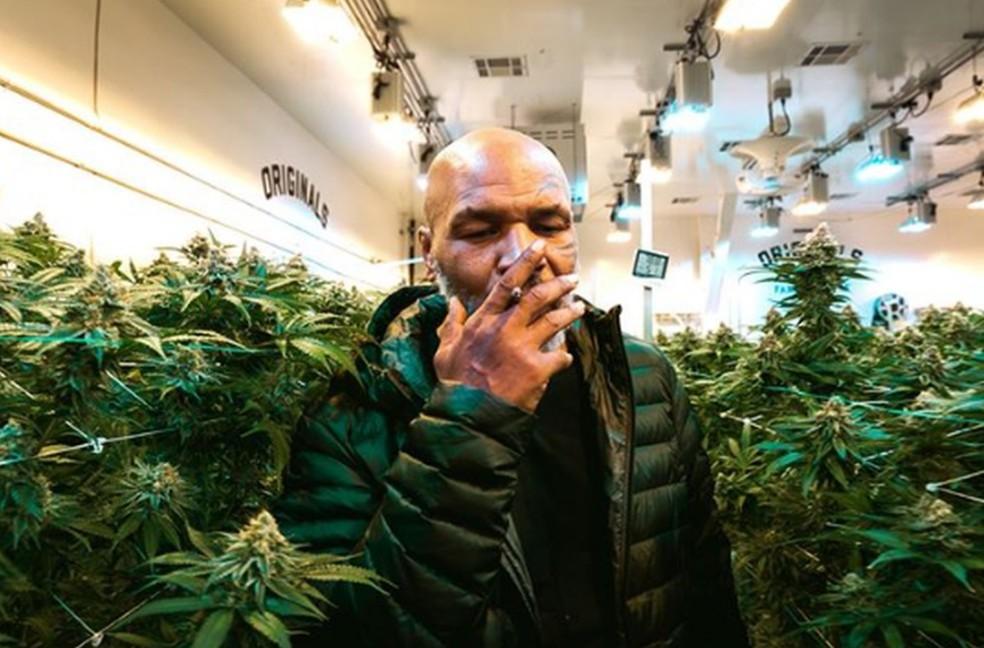 Tyson em sua empresa de maconha — Foto: reprodução