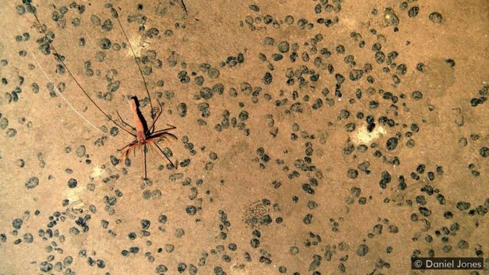 Criaturas maiores são raras nesses ambientes — Foto: DANIEL JONES