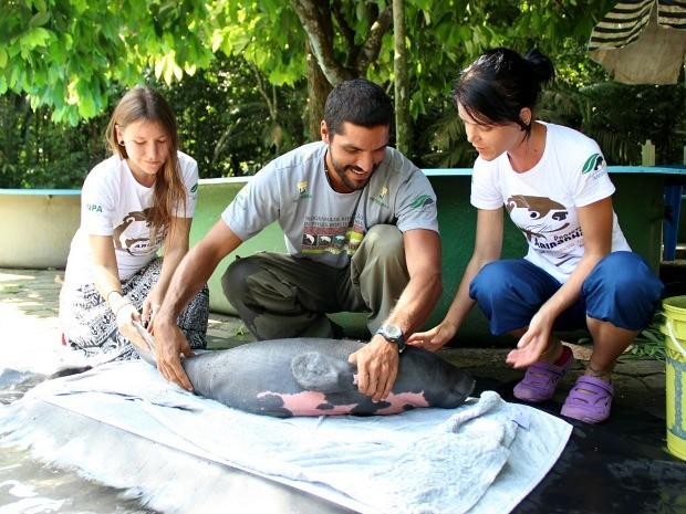 Animal foi resgatado no município de Anamã, à 165 km da capital (Fot Jamile Alves/G1 AM)