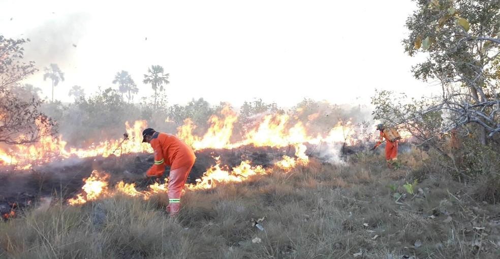 Brigadistas estão combatendo chamas há sete dias — Foto: Secretaria de Meio Ambiente/ Prefeitura de Peixe