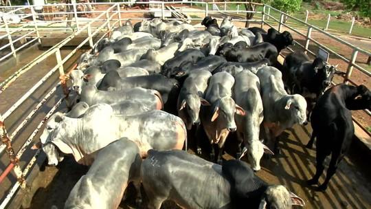 Cantanhêde: 'Aumento da carne, dólar e gasolina não é um fator politicamente simpático'