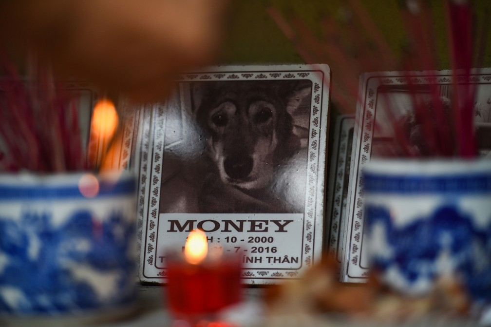 Velas acesas e incenso são acesos em homenagens aos animais de estimação enterrados em cemitério de Hanói, no Vietnã  — Foto: Nhac Nguyen / AFP