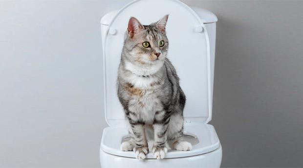 O Litter Kwitter promete ensinar gatos a fazer suas necessidades na privada (Foto: Divulgação)