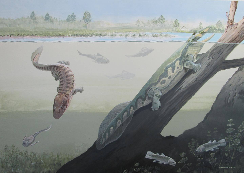 Tetrápodes da África com quatro patas (Foto: Maggie Newman)