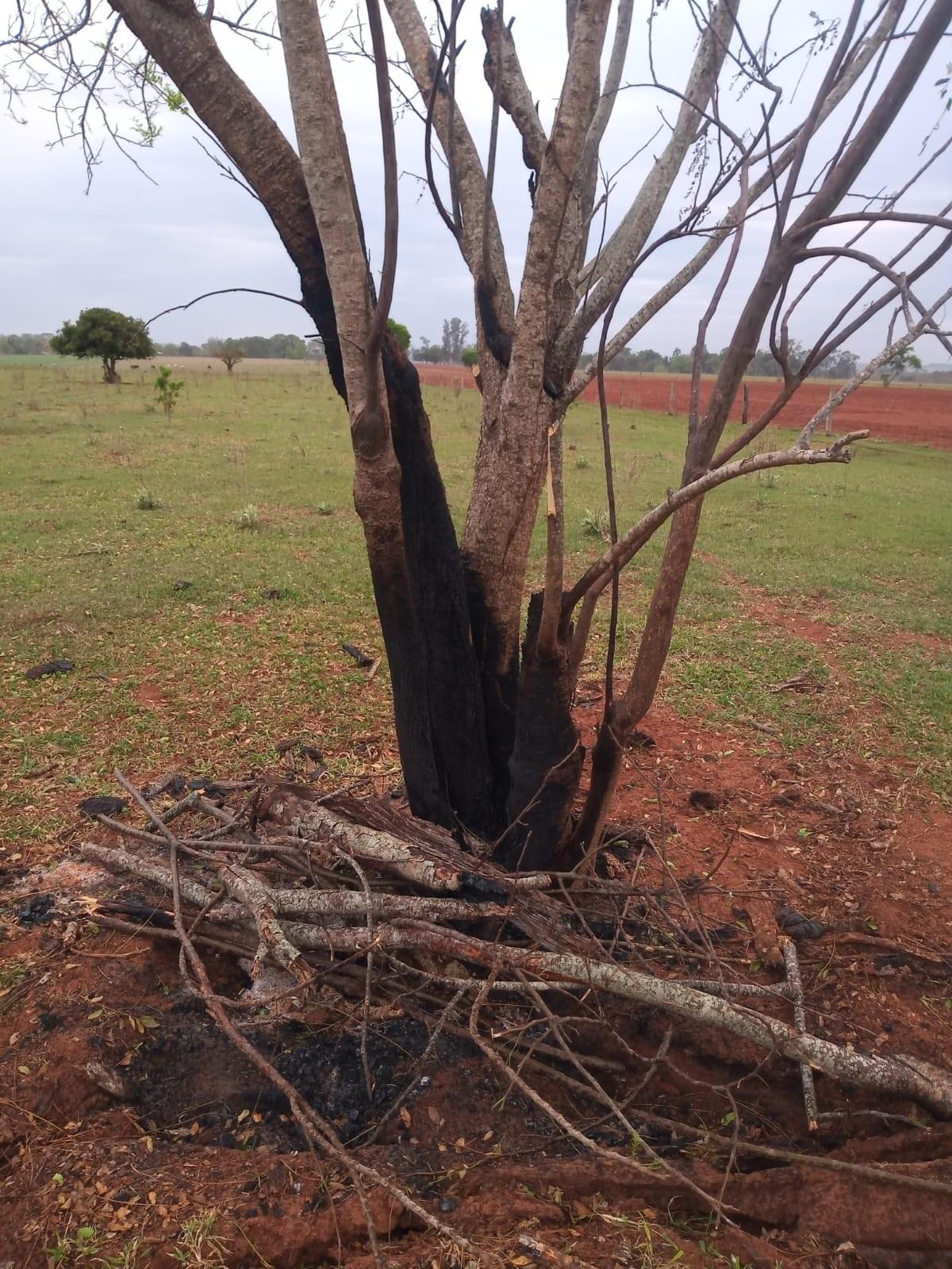 Fiscalização constata danos provocados pelo fogo em árvores nativas e adverte sitiantes em Rosana e Teodoro Sampaio