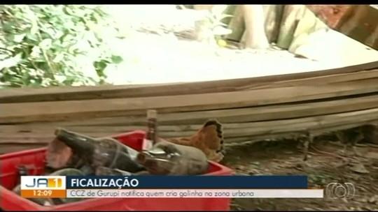 CCZ começa a fiscalizar denúncias de criações de galinhas na área urbana em Gurupi