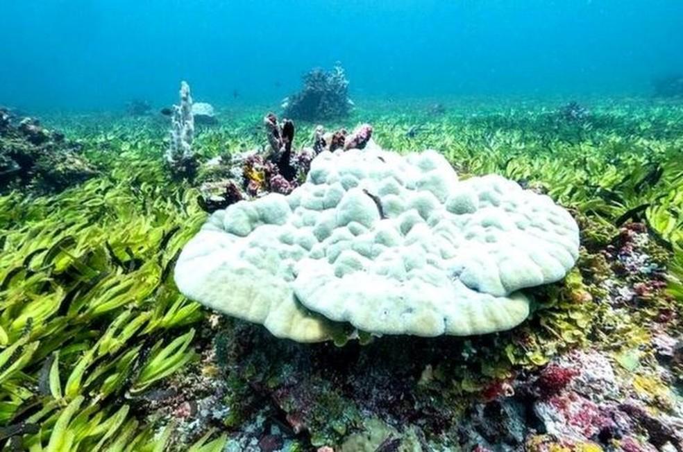 Prados de ervas marinhas no banco de Saya de Malha ajudam o oceano a absorver carbono — Foto: Greenpeace