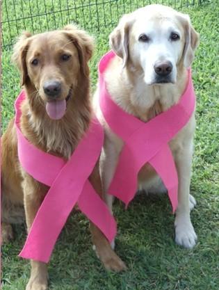 Animais na campanha do Outubro Rosa (Foto: Divulgação)