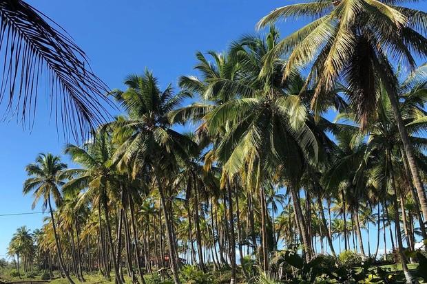 O Bar da Praia, palco de todas as festas diurnas gratuitas, será o Tikal, que durante a noite de alguns dias receberá parte das festas open bar, as maiores do festival (Foto: reprodução instagram (@goptun)