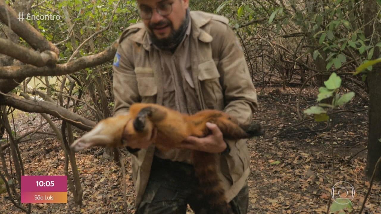 Biólogo relata sofrimento dos animais nos incêndios do Pantanal