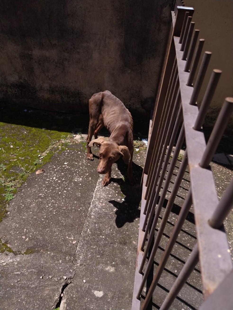 Moradora de Jundiaí denuncia abandono de cães em residência: 'Estão passando fome' — Foto:  Arquivo pessoal