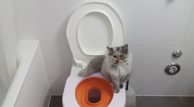 Gatos usam técnica da Little Kwitter para fazer cocô e xixi no vaso sanitário (Foto: Divulgação)