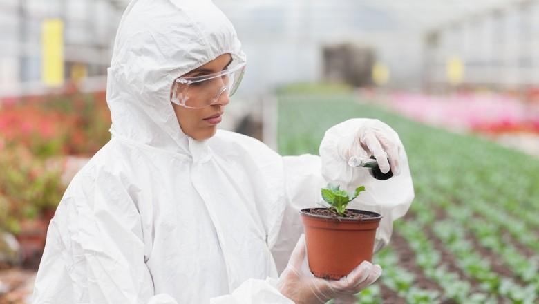 agricultura_fertilizantes (Foto: Thinkstock)