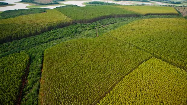 Unidade florestal de plantio de eucaliptos da empresa francesa Vallourec (Foto: Divulgação)