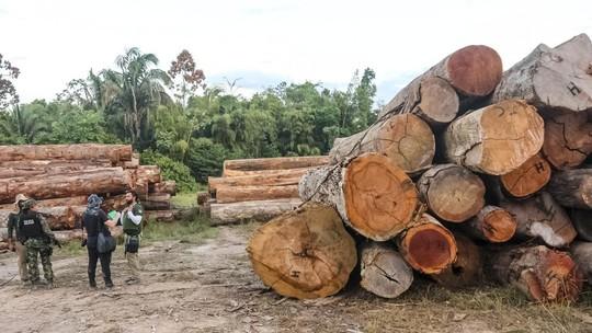 Foto: (Agência Pará/Divulgação)