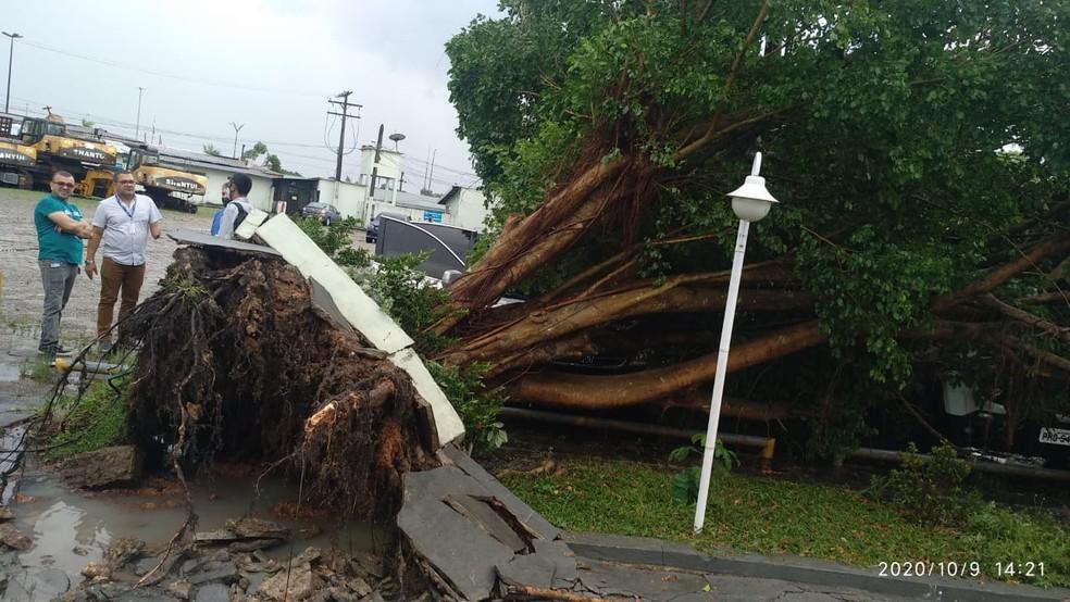 Árvore caiu no estacionamento da Afeam. — Foto: Divulgação/Corpo de Bombeiros