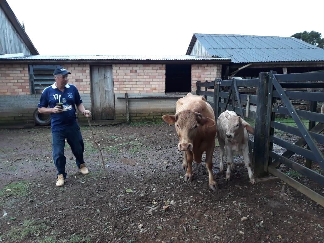 Produtor de Esmeralda usa exame de DNA para provar que gado foi furtado de sua propriedade - Notícias - Plantão Diário