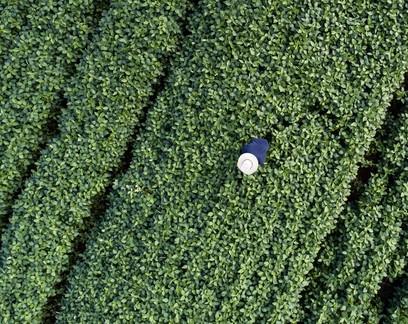 Preço de terras para cultivar grãos sobe mais de 50% no Paraná em um ano