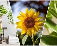 Simpatia com plantas: conheça o poder místico de 10 espécies