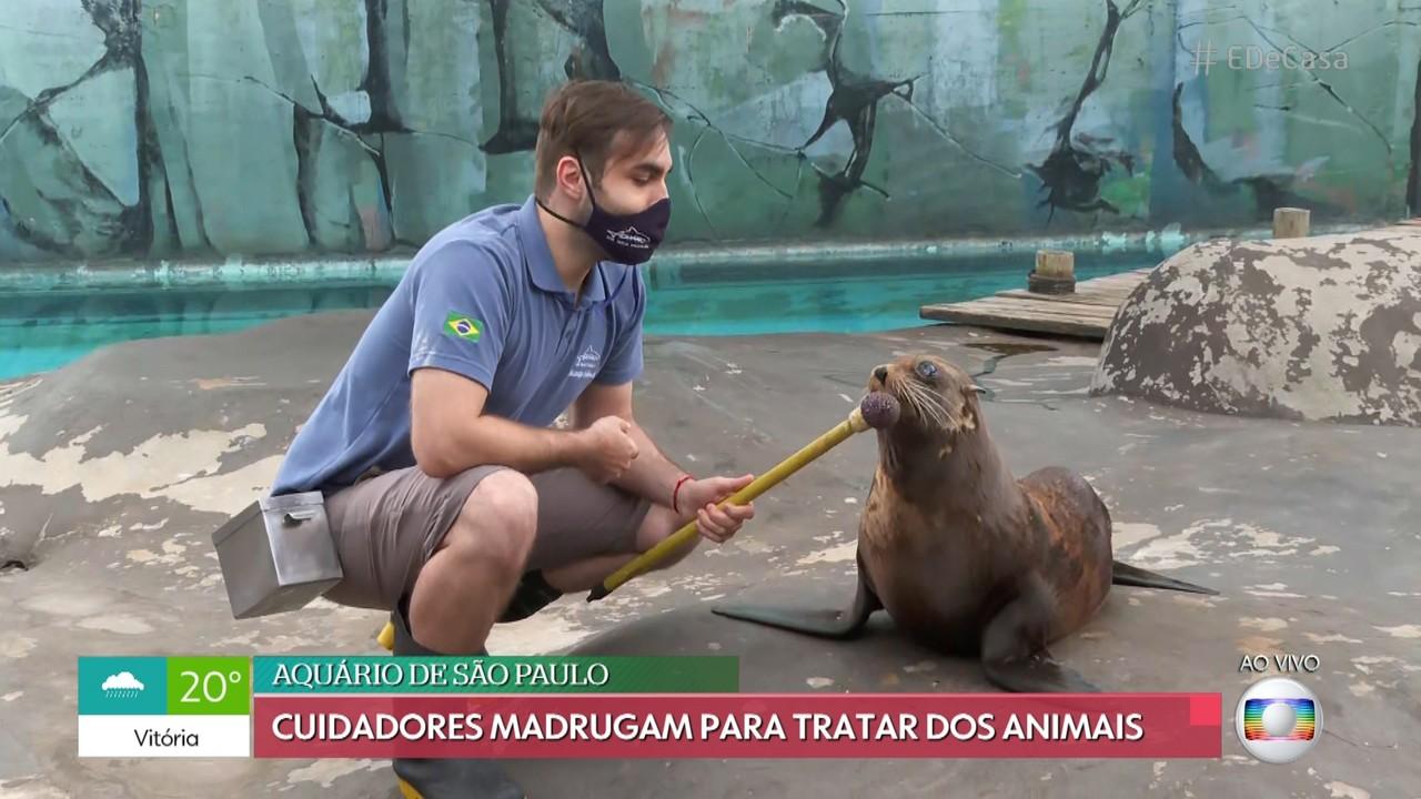Cuidadores acordam cedo para tratar animais do Aquário de São Paulo