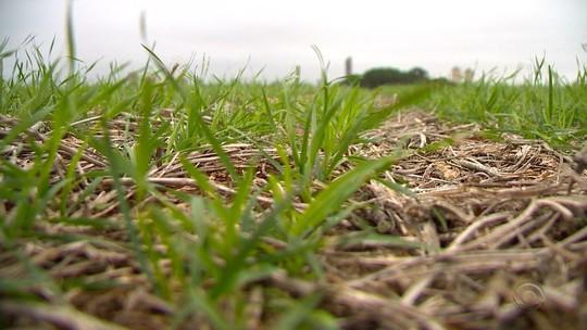 Após greve de caminhoneiros e chuva, plantio de trigo avança no Rio Grande do Sul