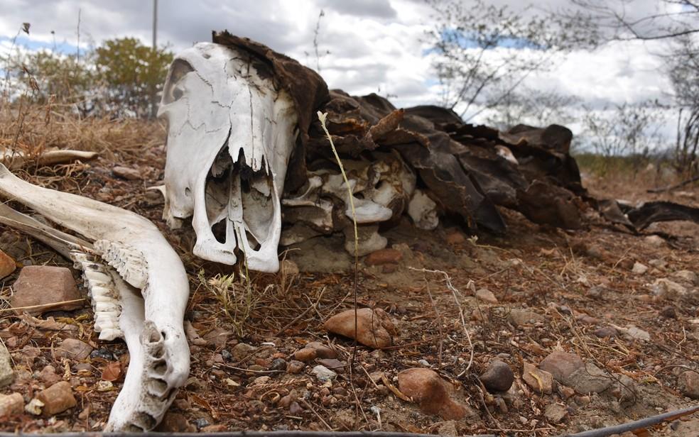 Com a seca que assola o RN há sete anos, animais mortos às margens das rodovias fazem parte de um cenário desolador — Foto: Anderson Barbosa/G1