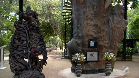 Cinzas de Frans Krajcberg são depositadas em árvore do sítio onde morava, no sul da Bahia