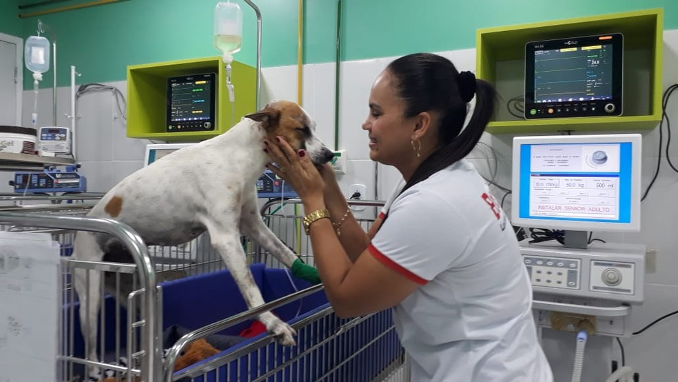 Dulci Barbosa resgatou e acompanha a recuperação de Nemeria em uma veterinária particular de São Luís — Foto: Arquivo Pessoal
