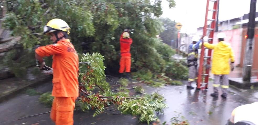 Bombeiros utilizaram serra para retirar árvore da rodovia — Foto: Ascom/Bombeiros