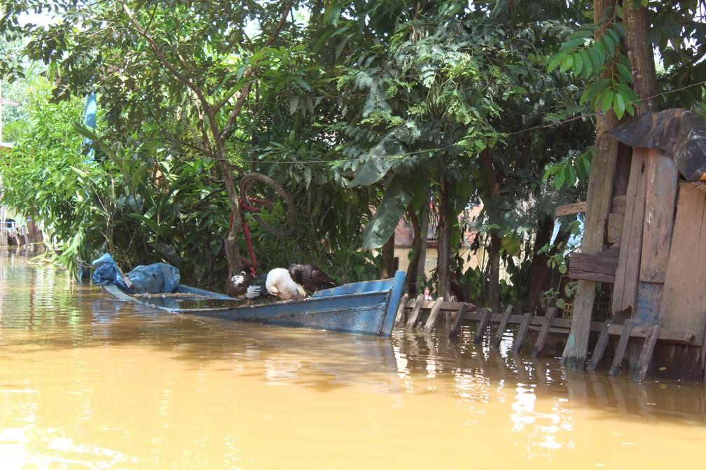 Aves se abrigam em barco na estrada do Belmont — Foto: Cássia Firmino/G1